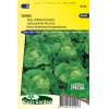 SL0125 - Lettuce Butterhead Larissa