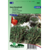 SL2045 - Summer Savory (Satureja hortensis)